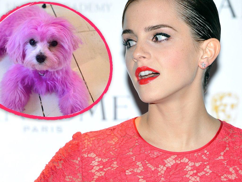 Emma Watson und ihr pinker Hund