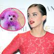 Emma Watson ging jetzt mit einem pinken Hund spazieren