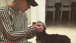Justin Bieber hat einen neuen Hund