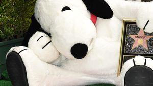 Snoopy bekommt einen Stern auf dem Walk of Fame