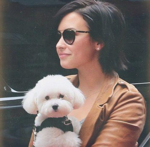 Demi Lovato verkündete via Twiiter den Tod ihres Hundes