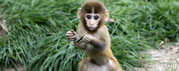 Kleiner Affe