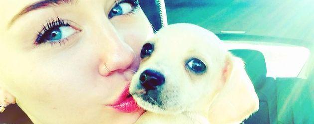 Miley Cyrus mit ihrem kleinen Hund Bean