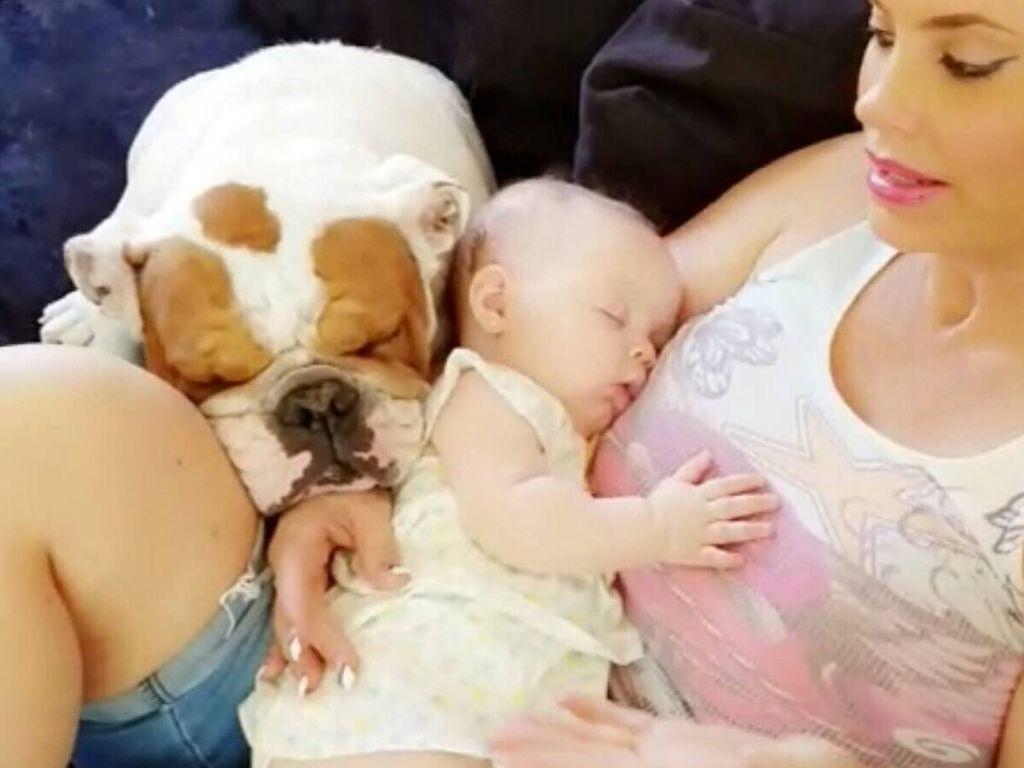 Coco Austin mit Bulldogge Sparty und Tochter Chanel Nicole