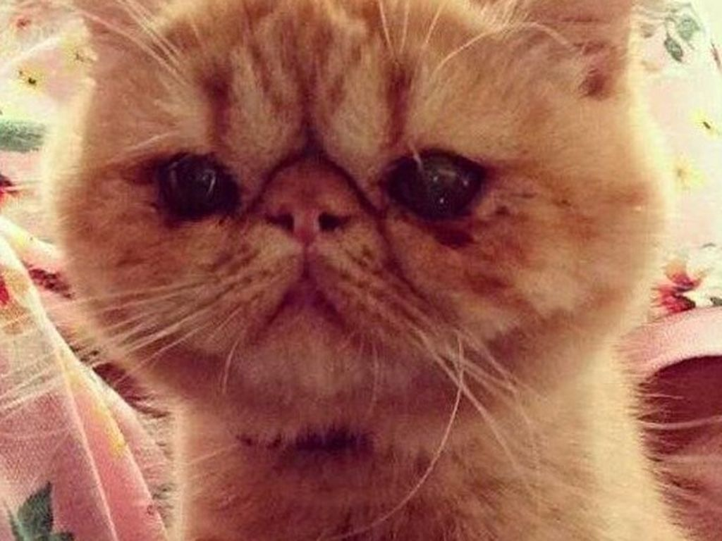 Where S Justin Biebers Cat Tuts