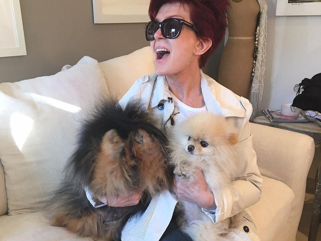 Sharon Osbourne mit ihren Hunden
