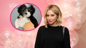 Nach Tod des Hundes: Ashley Tisdale hat neuen Vierbeiner