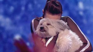 Ist der süße Hund Pudsey etwa schon Millionär?