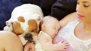 Schock für Popo Coco & Ice-T: Bulldogge stirbt nach Knie-OP