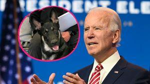 Beim Spielen mit Hund: Joe Biden hat sich den Fuß gebrochen!