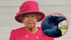 Arme Queen: Königlicher Rabe vom Tower of London vermisst!
