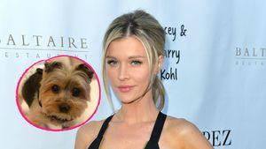 Schwangere Joanna Krupa trauert um ihren Hund Rugby (†)