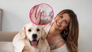 Blutige Wunden: Novalanaloves Hund Oreo wurde attackiert