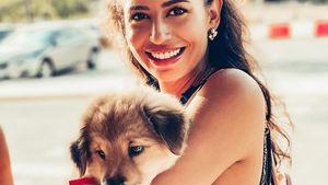 Knuffiger Nachwuchs: Bachelor-Girl Eva rettet Straßenhund