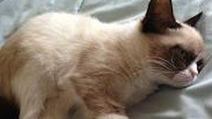 Grumpy Cat war als Katzenbaby schon schlecht drauf