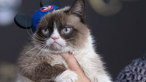 Not amused: Grumpy Cat hasst den Red Carpet