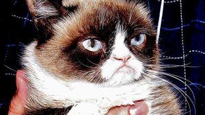 Grumpy Cat als Kinostar: Nun gibt es den Trailer!