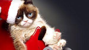 Grumpy Cat feiert ihr schrecklichstes Weihnachten