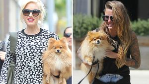 Frauen-Date: Traf sich Gwen Stefani mit Sophia Thomalla?