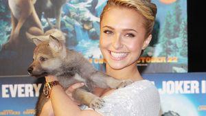 Hayden Panettiere mit einem kleinen Hund