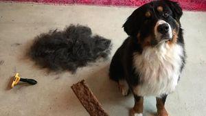 Bruno, der Hund von Jan Leyk