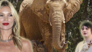 Elefanten-Fetisch! Pete Doherty outet Kate Moss