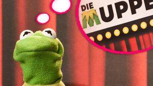 Die Muppets: Todes-Angst in Deutschland
