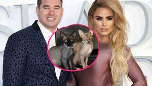 Katie Price' Ex tritt nach: Katzen pinkelten überall hin!