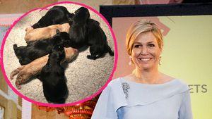Süßer Nachwuchs: Königin Maxima freut sich über Hunde-Welpen