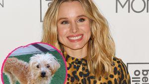 Dreibeiniger Familienzuwachs: Kristen Bell adoptiert Hund