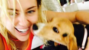 Miley Cyrus in Yoga-Kluft mit ihrem Hund