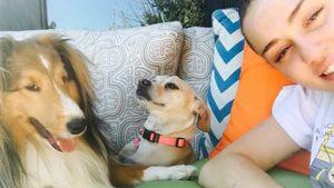 Miley Cyrus mit ihren Hunden