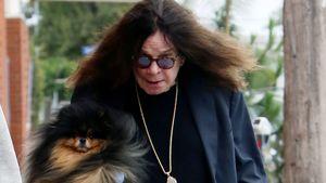 Zottel-Comeback: Vermisster Ozzy Osbourne ist wieder da