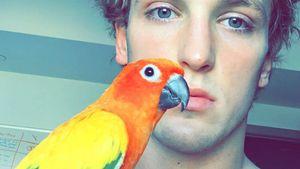 Von Dogge gefressen: Logan Pauls Papagei Maverick ist tot!