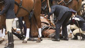 Pferde-Drama bei Potsdamer Adelshochzeit