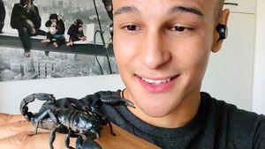 Skorpion: Dschungelkönig Prince Damien hat wilde Haustiere!