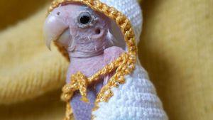 Nackt & niedlich: Hier kommt Rhea, der Papagei ohne Federn