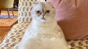 Welchem Superstar gehört wohl diese tiefenentspannte Katze?