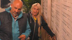 """""""Ein-Mann-Show""""?: Ginger & Buddy Zlatko lästern über Joey!"""