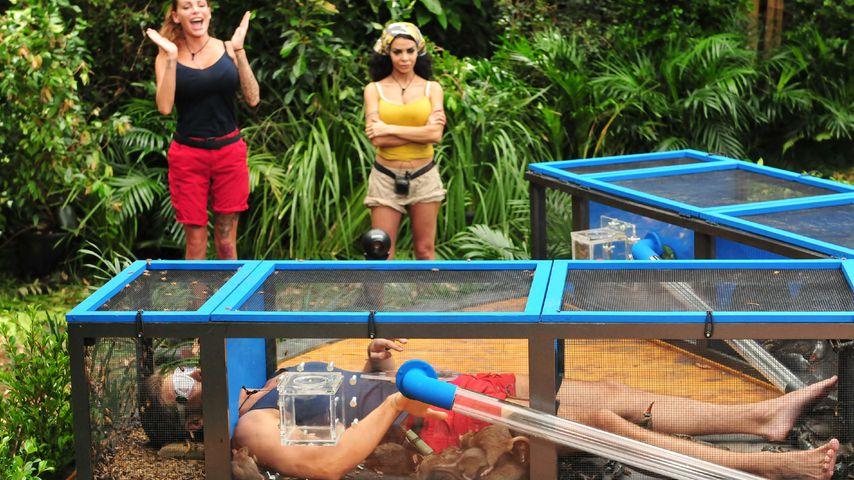 """Alexander """"Honey"""" Keen, Gina-Lisa Lohfink und Kader Loth bei der Dschungelprüfung"""