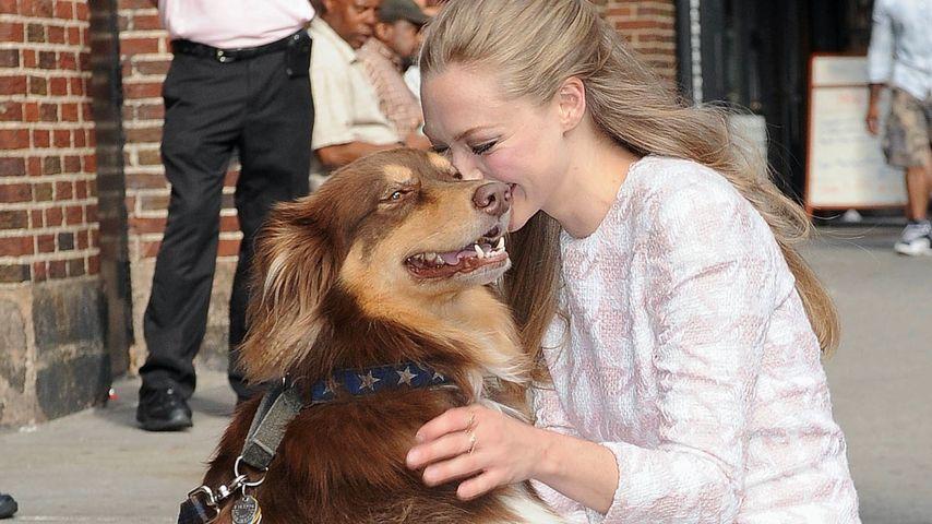 Amanda Seyfried: Ganz vernarrt in ihren Hund