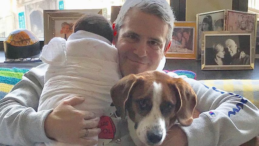 Bester Babysitter: Andy Cohens Hund kümmert sich um Baby