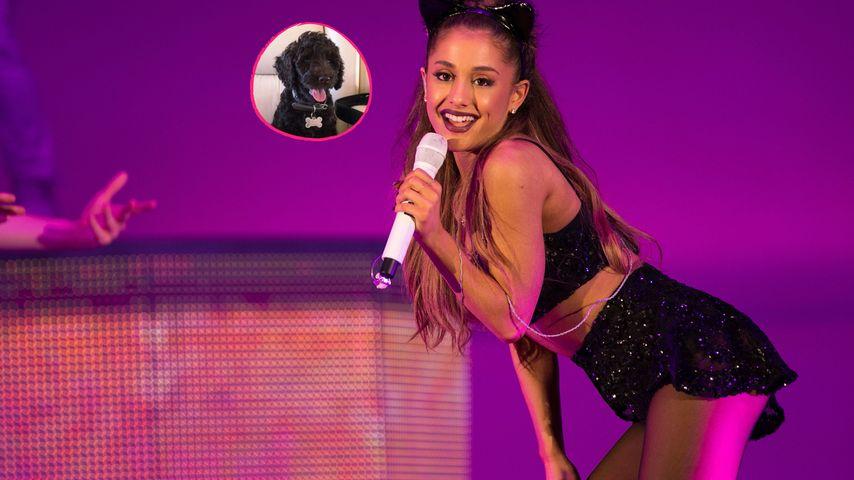 Welpe Nr. 4: So süß ist Ariana Grandes Baby-Hund