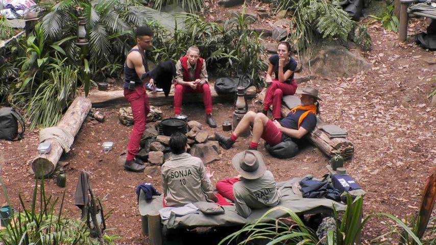 Dschungelcamp Tag 6