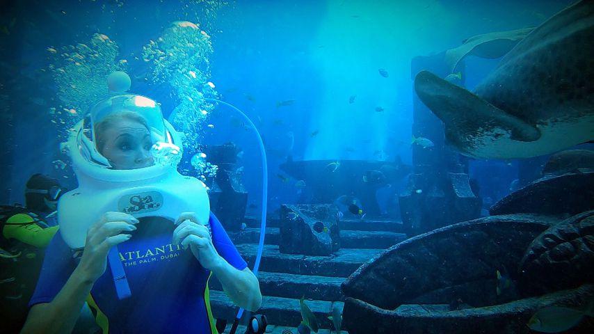 """""""Schmeiß dich rein!"""": Die Geissens streiten beim Hai-Tauchen"""