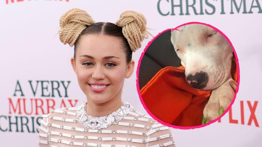 Shitstorm wegen Tierquälerei: Miley Cyrus malt ihren Hund an