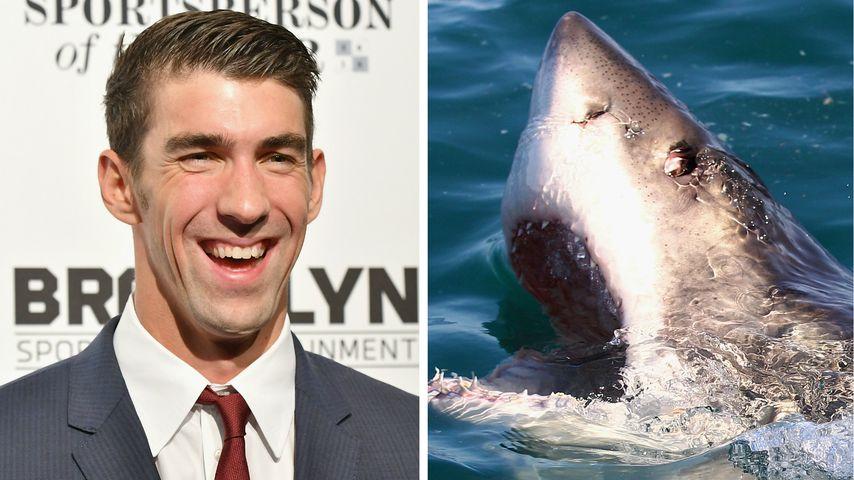 Olympia-Star Michael Phelps vs. Hai: Lebensmüdes See-Battle?