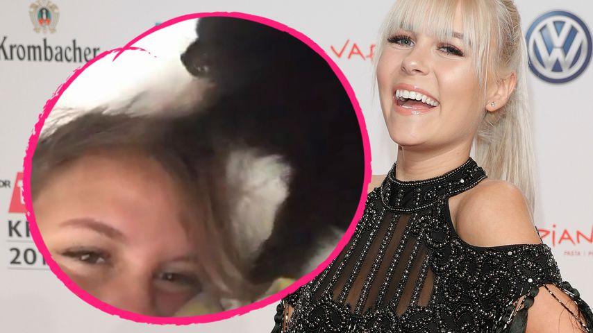 YouTube-Dagi: Hier wird sie frisiert – von ihrer Hündin!