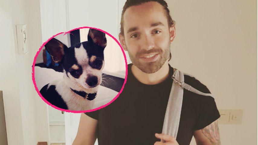 Daniel Küblböck fragte vor dem Verschwinden nach seinem Hund