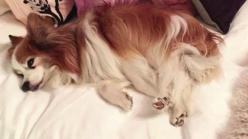 Stinky, Hund von Christina Aguilera